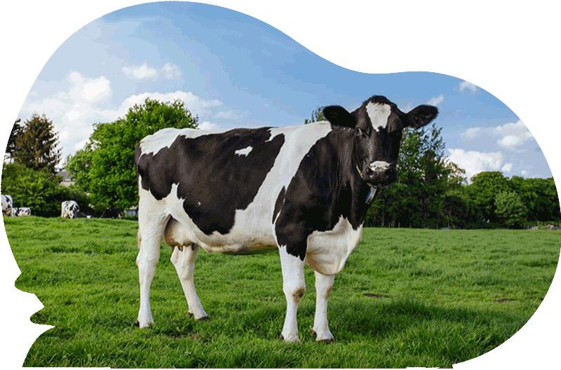 reem-farm