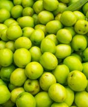 boroi plum