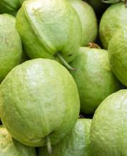 guava peyara